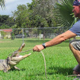 There was PLENTY of gator action in Season 2! Paul Bedard works a gato