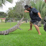 A gator leaps at Jimmy Riffle.