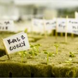 """Vegetable and herb seedlings in the """"greenhouse"""" at the Amundsen-Scott South Pole Station."""