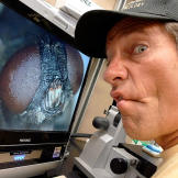 While observing flies look for mates, Mike Rowe learned to tell the di