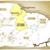 Guyana Gold