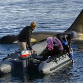 Filming killer whales from a boat in the Antarctic Peninsula.