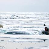 Filming polar bears up close.