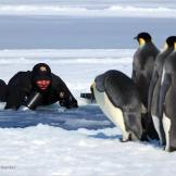Getting close to penguins at Cape Washington.