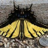 Spotted by Kimberlee Barehand Casey in Mesa, Arizona, United States