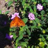 Spotted by Mr. Heeren in Leesburg, Georgia, United States