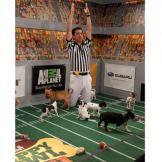 It's a touchdown!