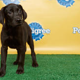 Puppy Bowl X: Back Up Pups