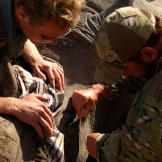 Saw (Navy SEAL fmr.) administering eye drops to rhino whilst being watched by pilot (Benjamin).