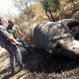 Oz (Green Beret) & Saw (Navy SEAL fmr.) encountering their first dead (poached) rhino scene.