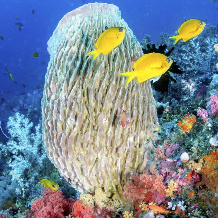 Pacific Reef Cam