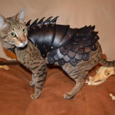 ... Ensure the fate of your kitty is secure with CAT BATTLE ARMOR.