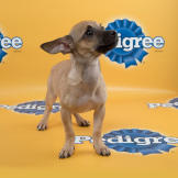 Arielle-starting-line-up-PuppyBowl-11-FLUFF