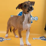 Andy-starting-line-up-PuppyBowl-11-RUFF