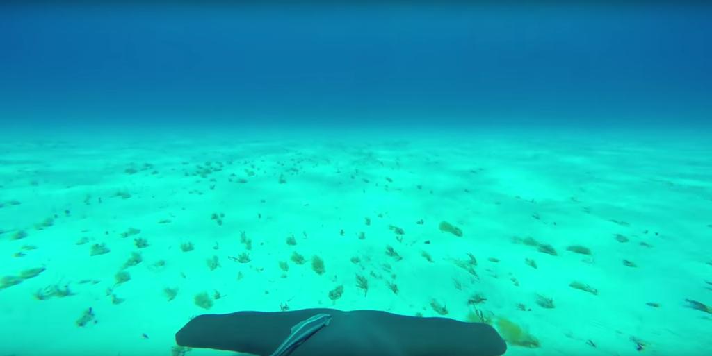 Viral Video An Ocean Floor Swim Through The Eyes Of A