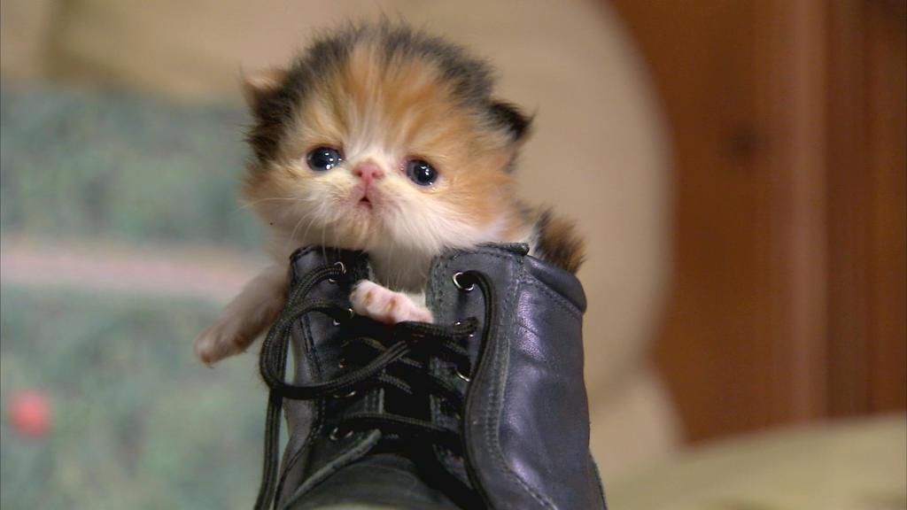 Cat Tv Show On Animal Planet