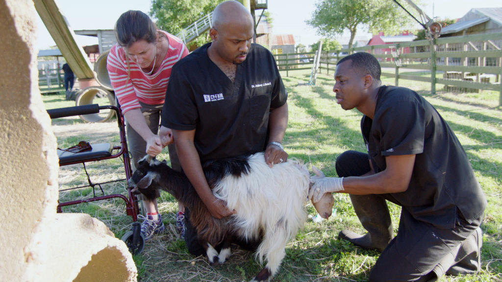 A Goat In Labor Sends Ross And Blue Into Action The Vet