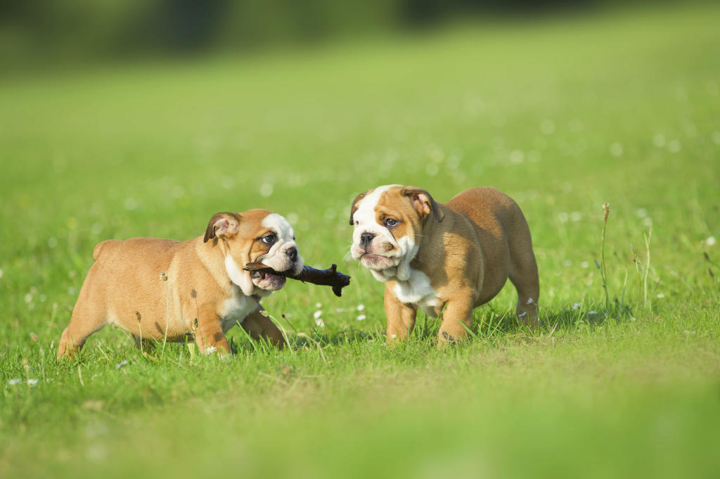 Active Dogs: The Benefits for Dogs and Their Owners ...