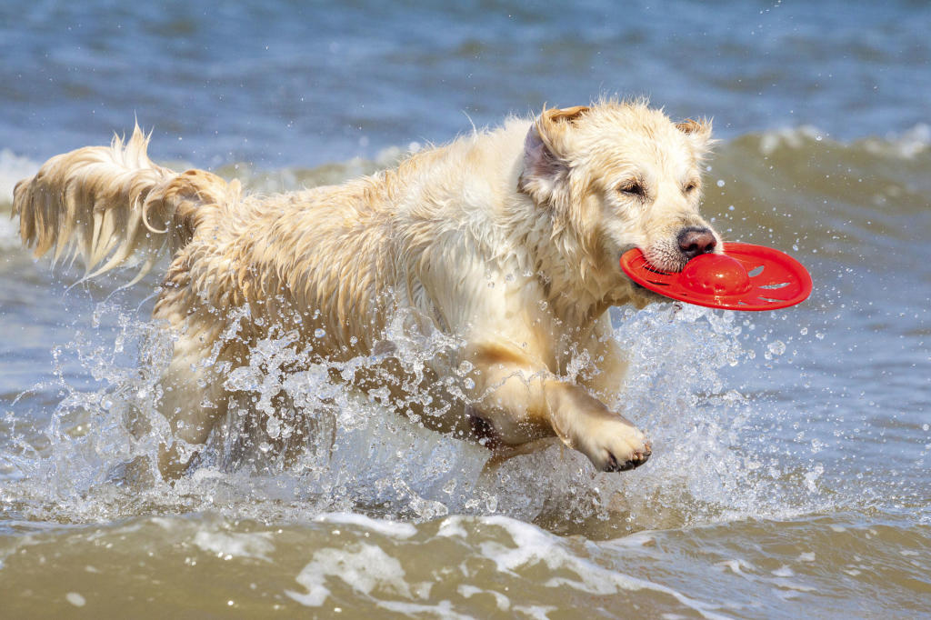Outdoor Activities for Owner and Pet | Healthy Pets ...