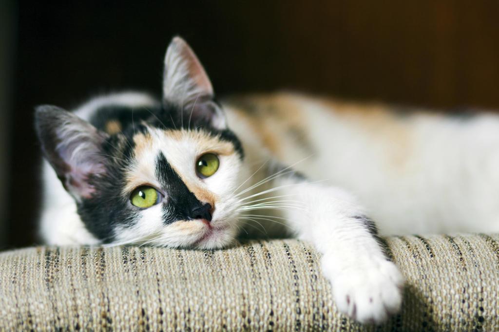 kitten vaccine cost