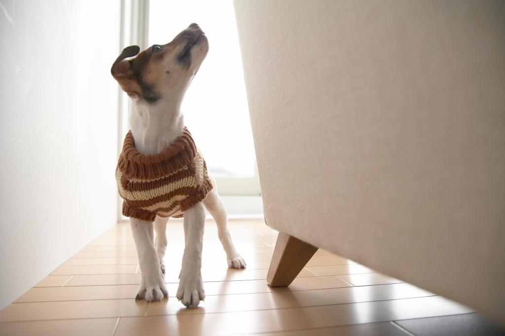 Can Dogs Sense The Supernatural Dog Behavior Animal Planet