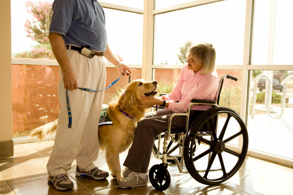 what is involved in therapy dog training? | dog training | animal planet