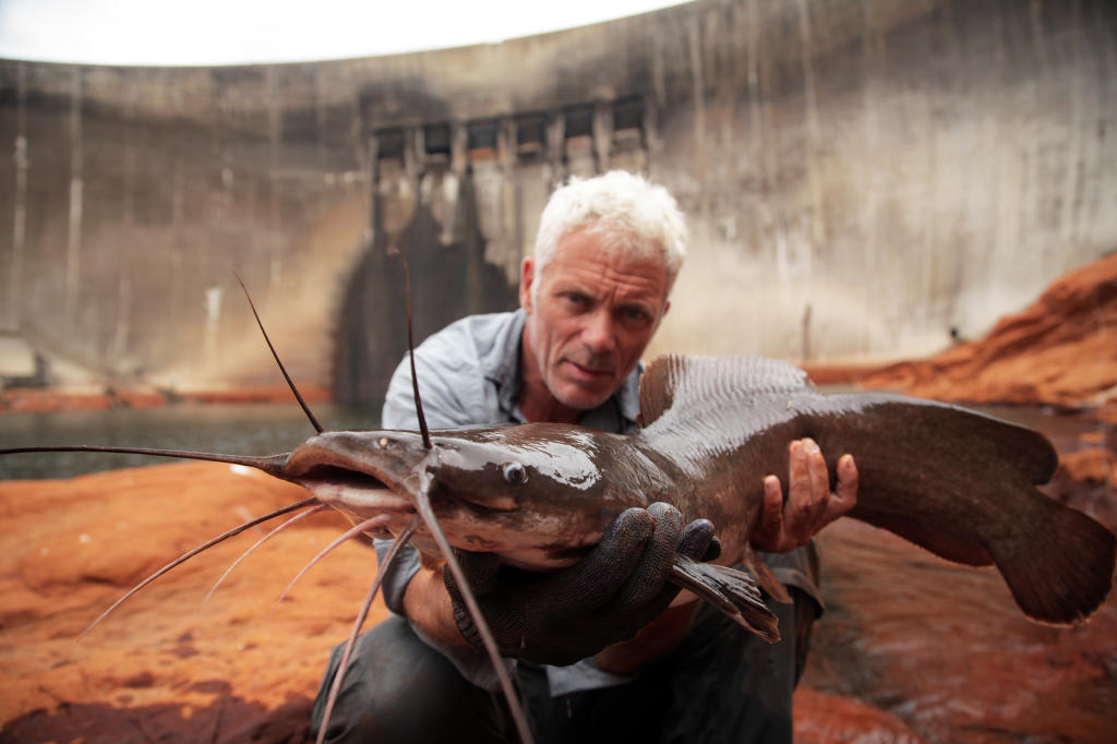 Vundu catfish river monsters animal planet for Monster fish show