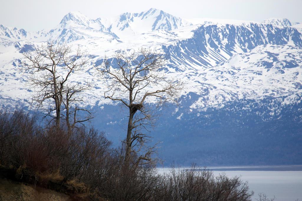 Live webcam alaska frontier show