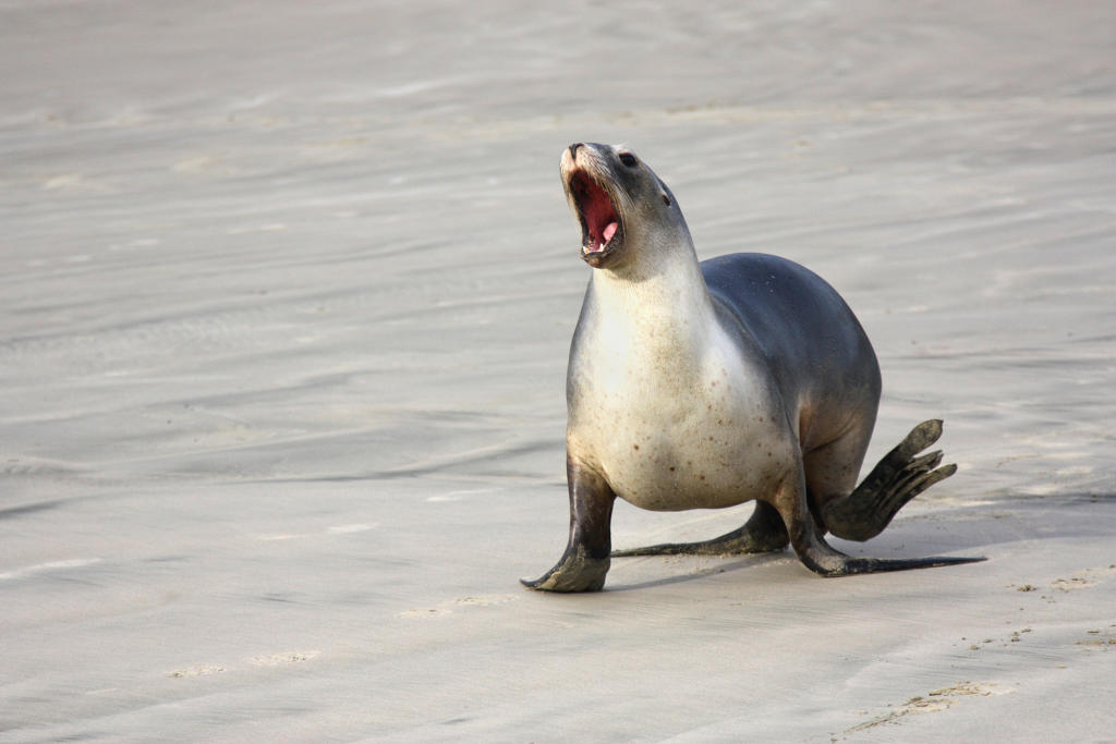sea-lion-FRONT-PAGE.jpg