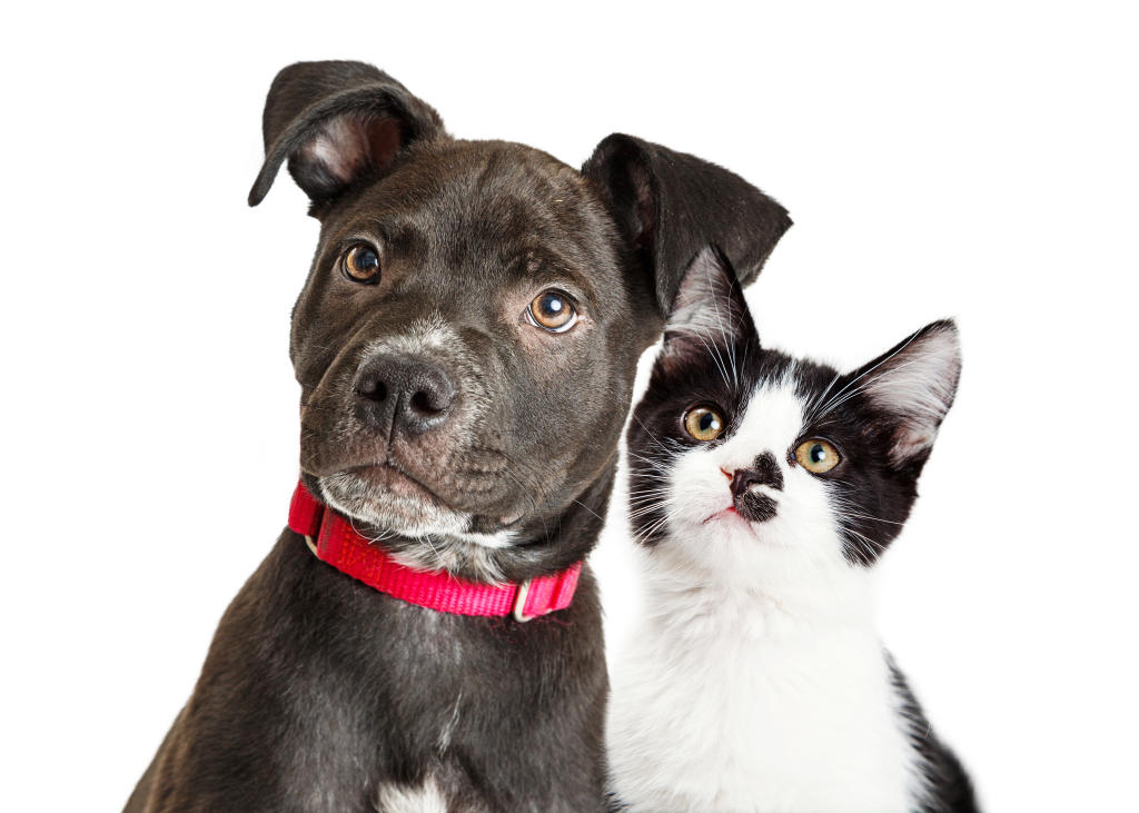7 Tips for Adopting the Perfect Dog or Cat for You ...