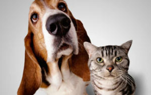 10 Tips for Bringing Dogs and Cats Together