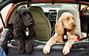 Top 5 Car Seats for Small Dogs