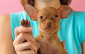 Green Pets Pets 101 Top 5 Greenest Pets