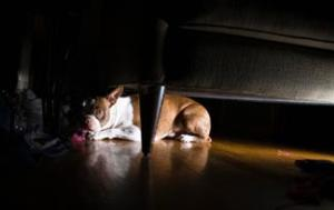 Can Dogs See In The Dark Healthy Pets Animal Planet