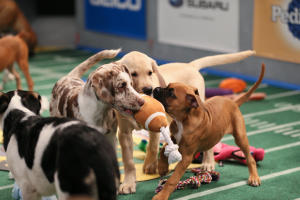 Puppy Bowl Game Day Revisited
