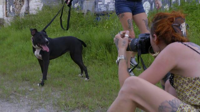 ... the Perfect Dog Picture   Pit Bulls and Parolees   Animal Planet