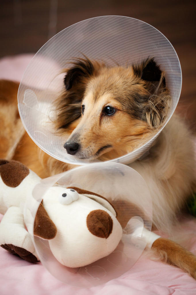 emergency care healthy dogs animal pla