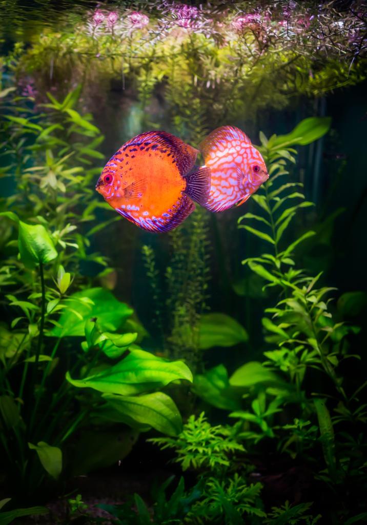 Aquarium Fish Animal Planet