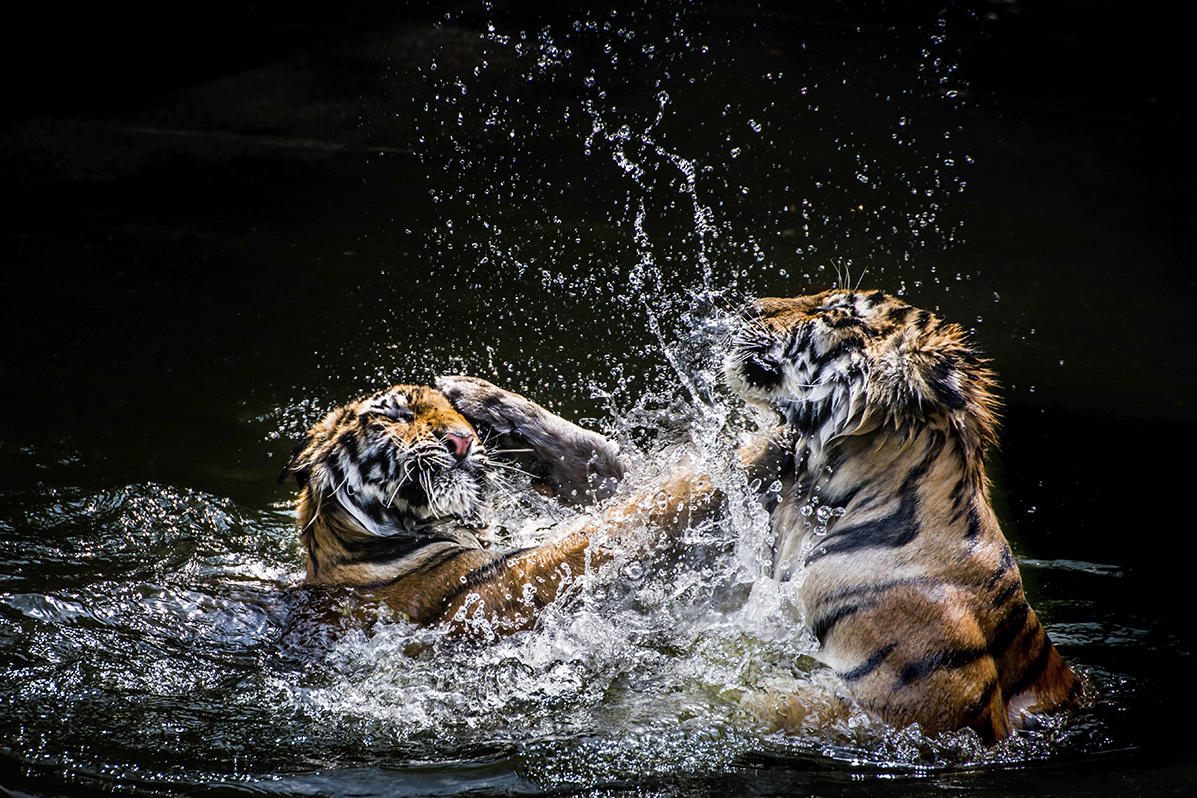 a look at the wonderful species tigers Must be beautiful to look at  the wonderful world of amazons different species of this family have varying amounts of yellow somewhere on their head.