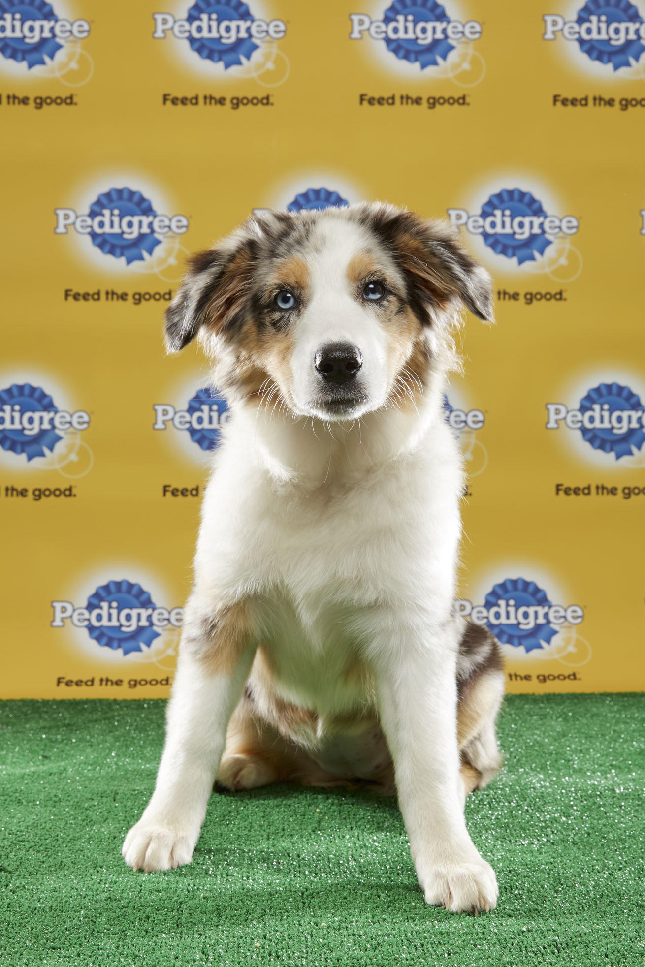 Puppy Bowl XIII: Puppy Preview