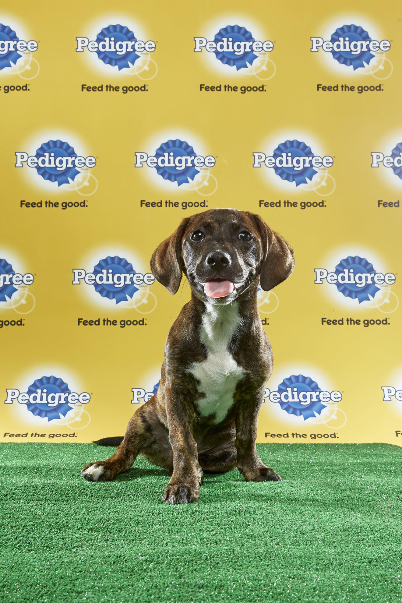 Puppy Bowl XIII Starting Lineup | Puppy Bowl | Animal Planet