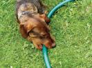 how to understand dog behavior