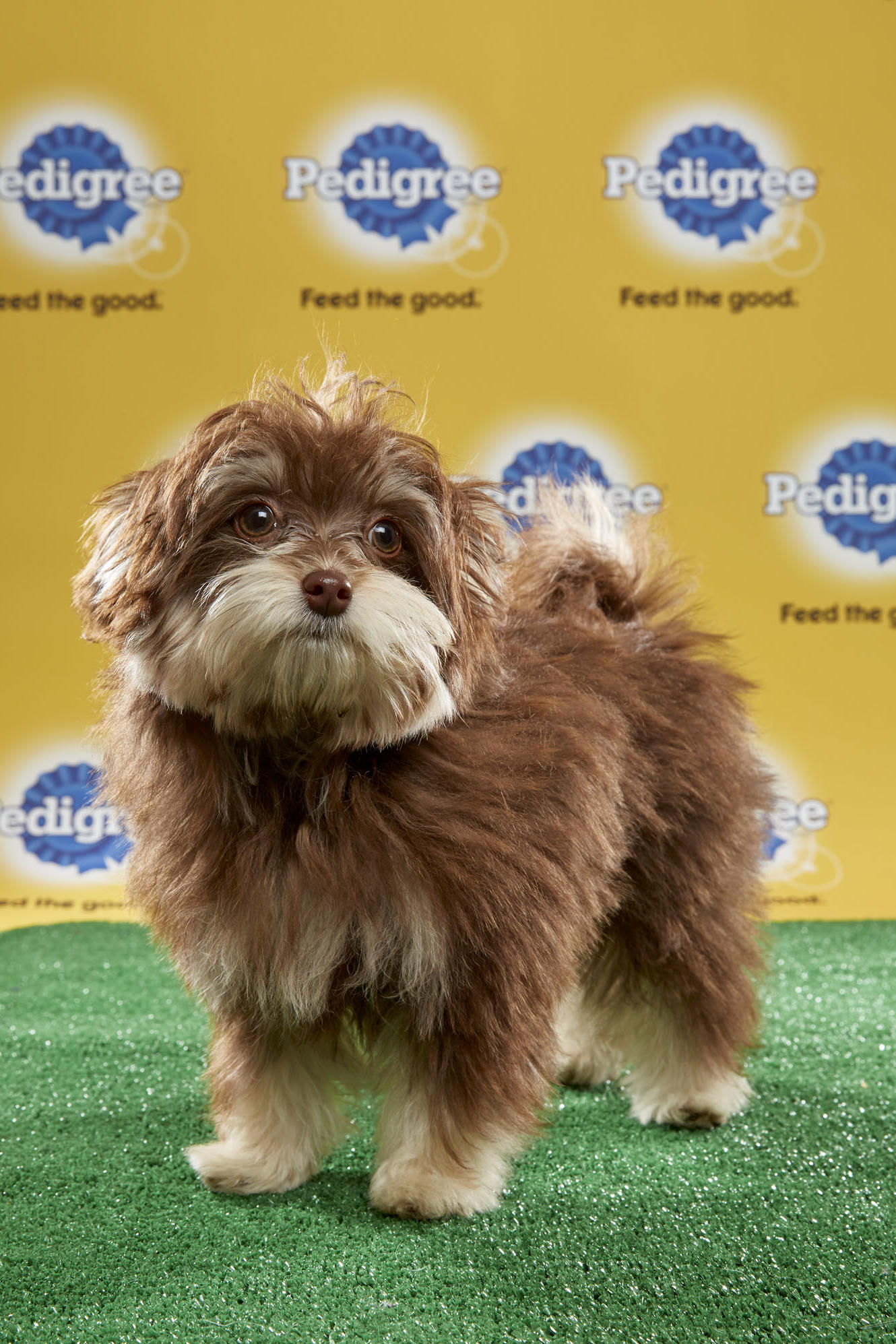 Puppy Bowl Xiii Starting Lineup Puppy Bowl Animal Planet