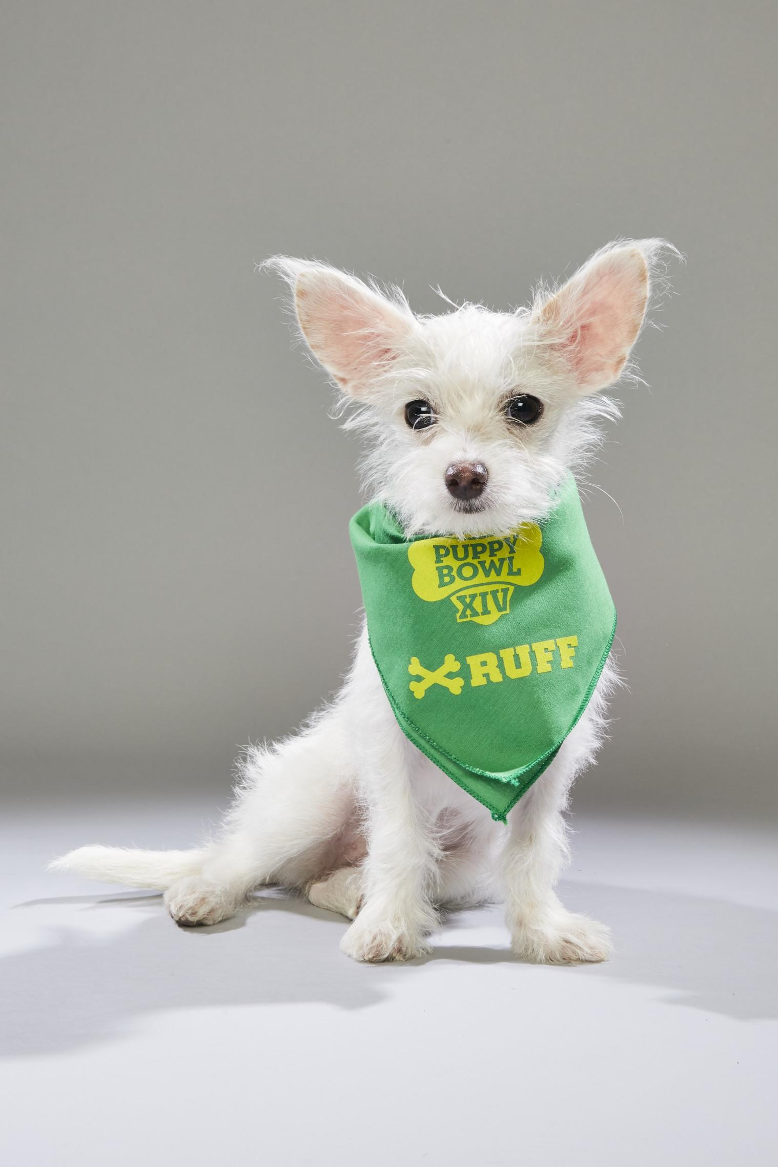 Puppy Bowl XIV Back Up Pups   Puppy Bowl   Animal Planet