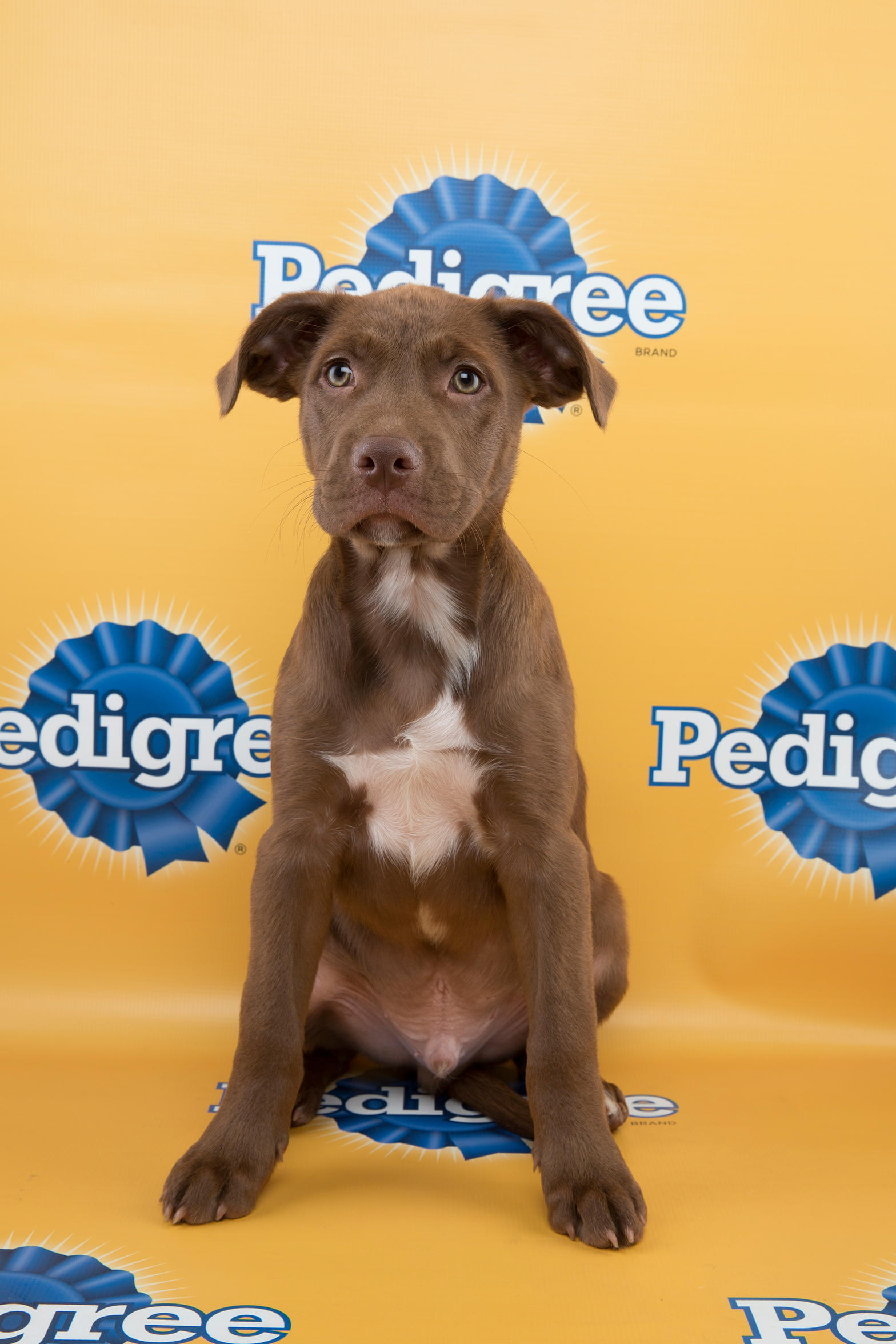 Puppy Bowl XI Starting Lineup s Puppy Bowl
