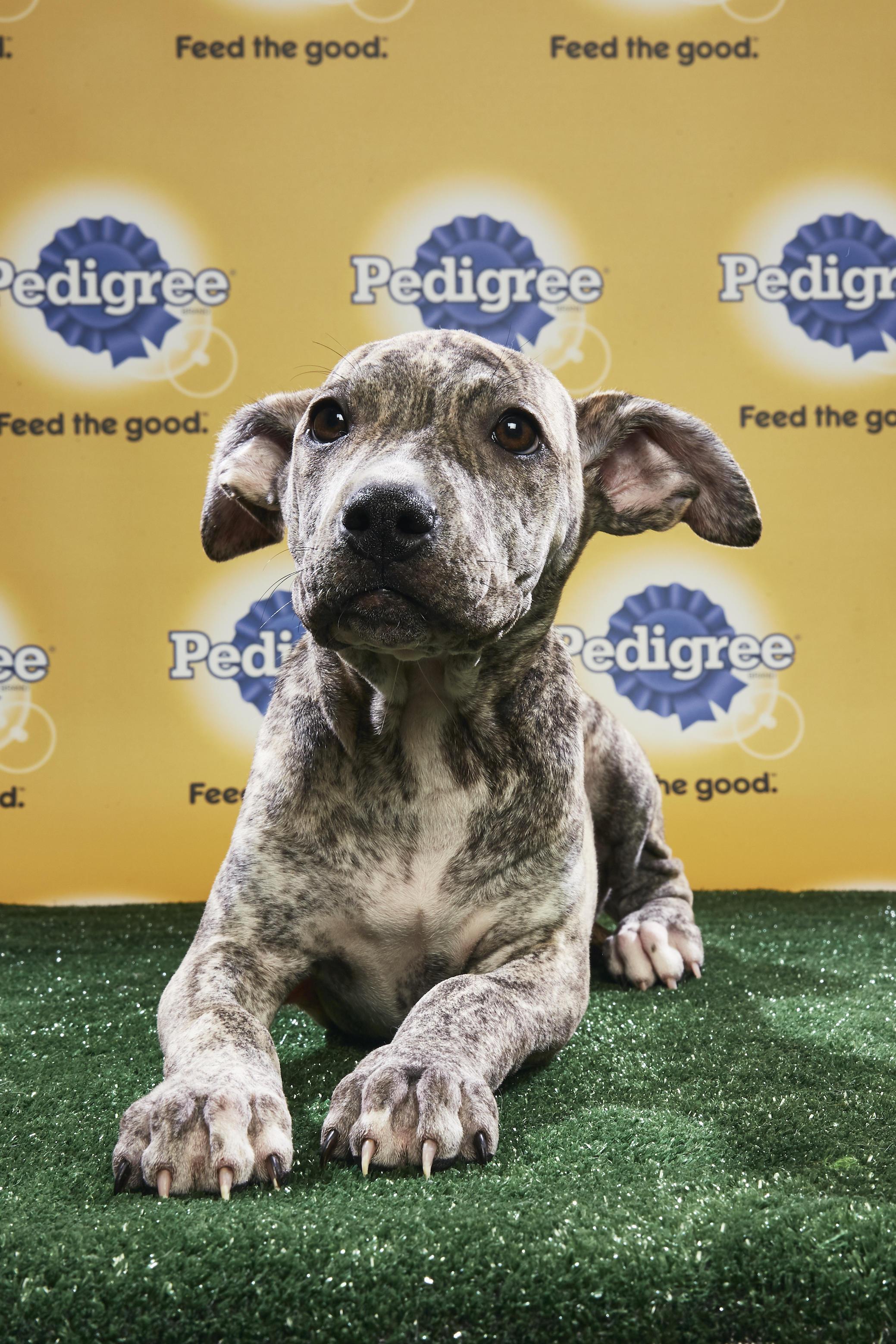 Puppy Bowl XIV Starting Lineup | Puppy Bowl | Animal Planet