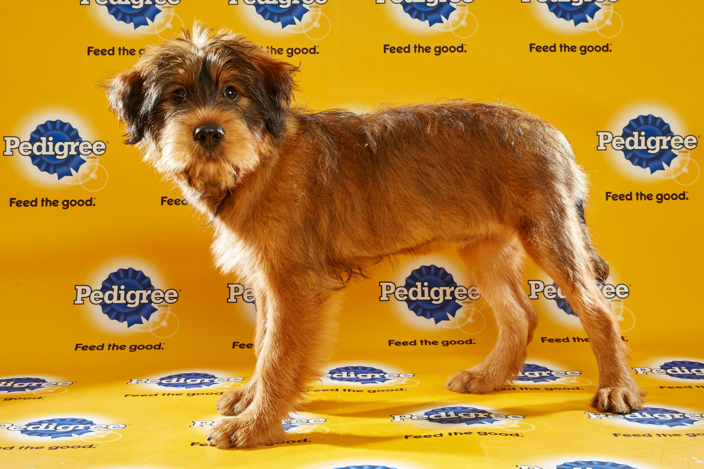 Puppy Bowl XII – Starting Lineup | Puppy Bowl | Animal Planet