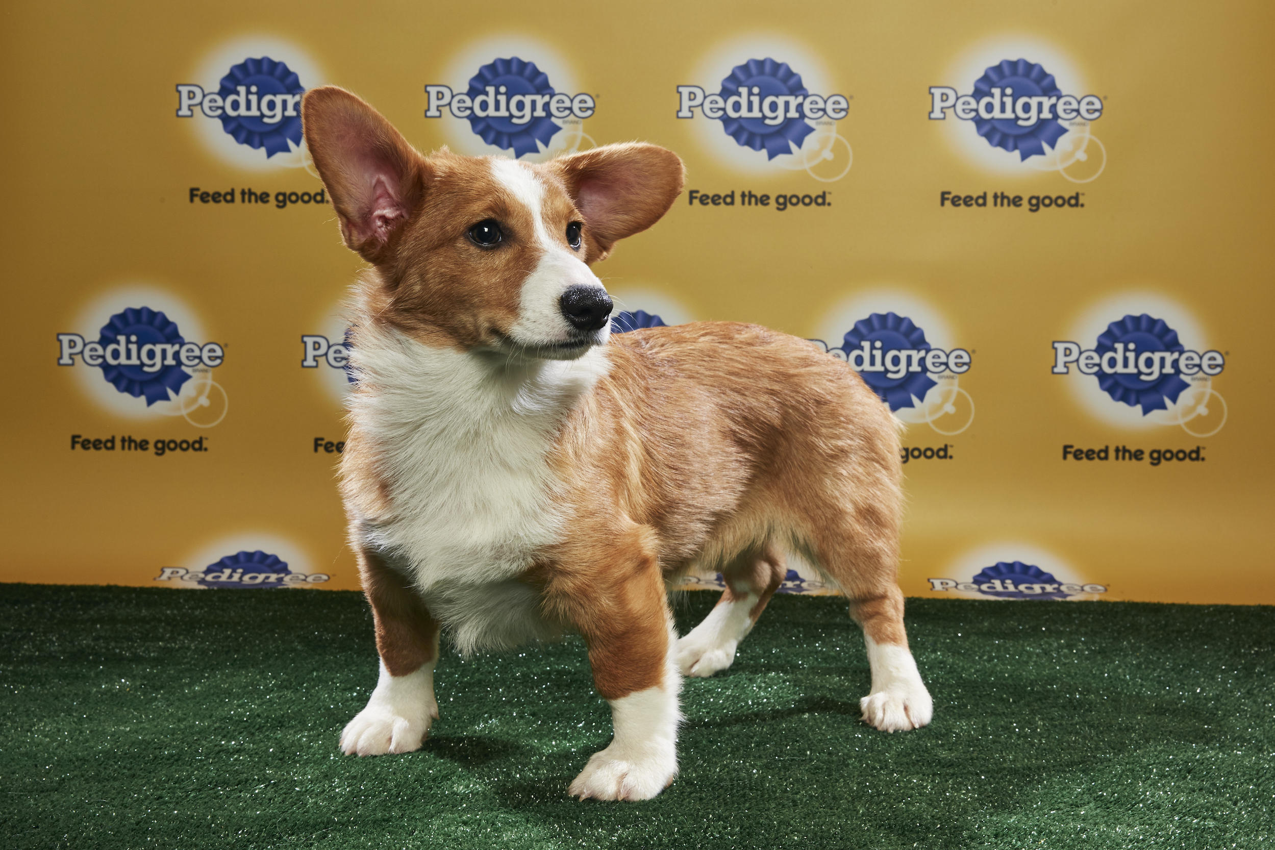 Puppy Bowl XIV Starting Lineup | Puppy Bowl | Animal Planet