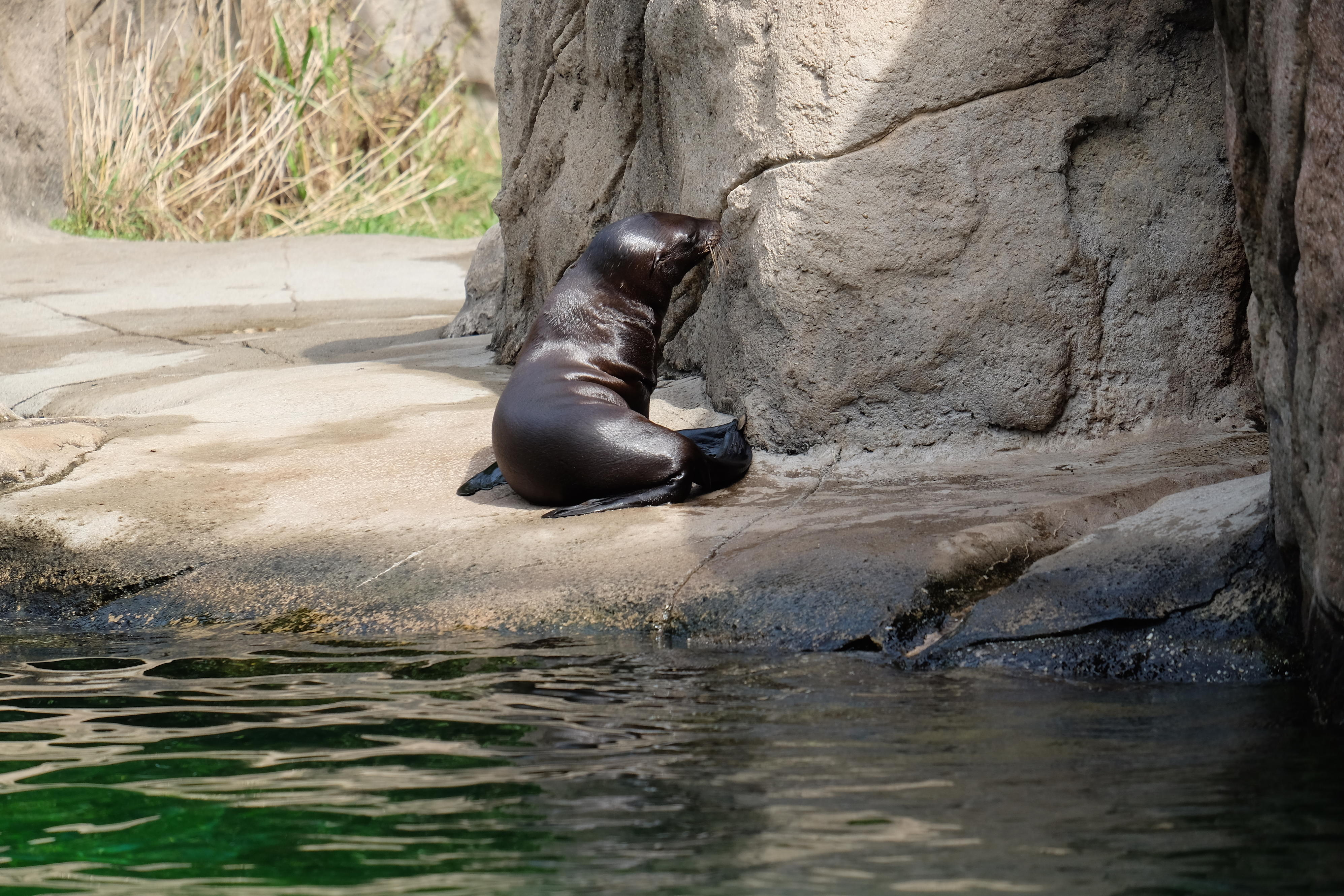 Meet The Animals Of The Bronx Zoo The Zoo Animal Planet