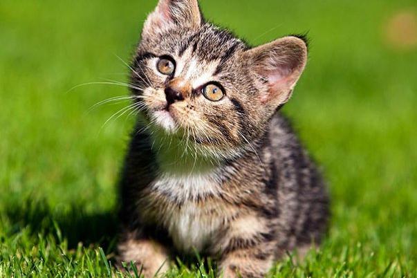 Vixen kitten tube search videos
